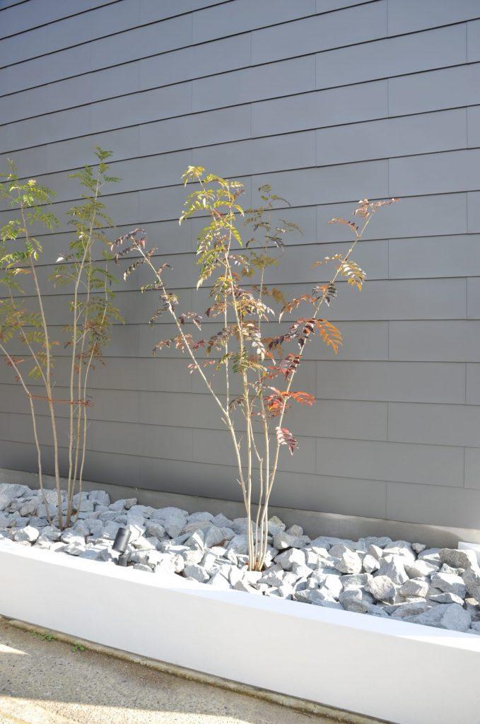 兵庫県 設計 建築家 モダン デザイン 樹木
